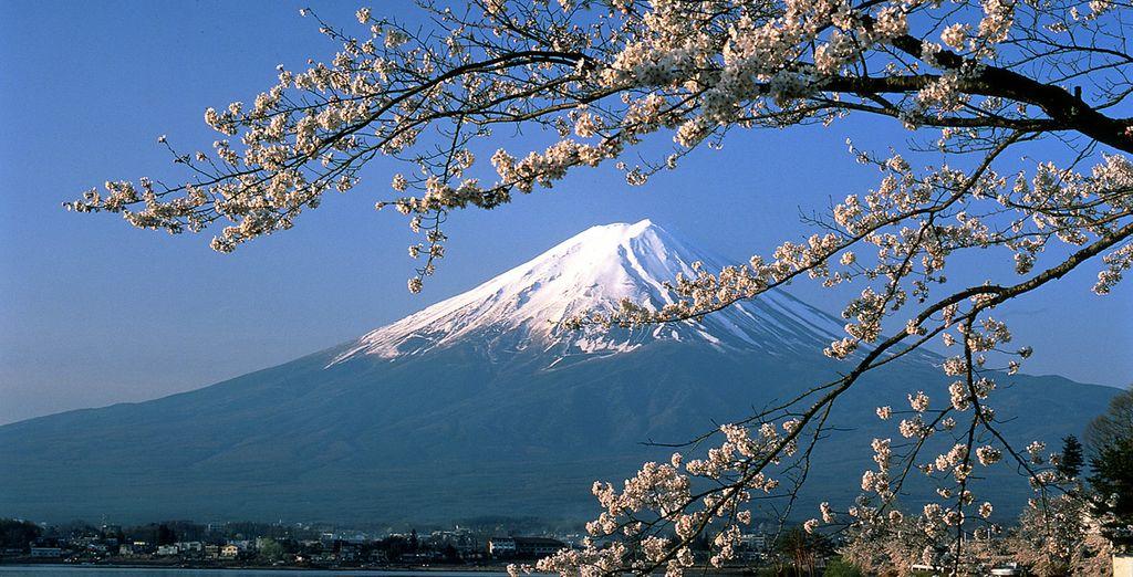Fotografia di Osaka e del monte Fuji innevato, accompagnato da ciliegi in fiore.