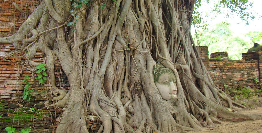 Rimarrete affascinati dalle sue rovine, come il tempio Wat Mahathat, dove le radici degli alberi hanno divorato la testa di un Buddha