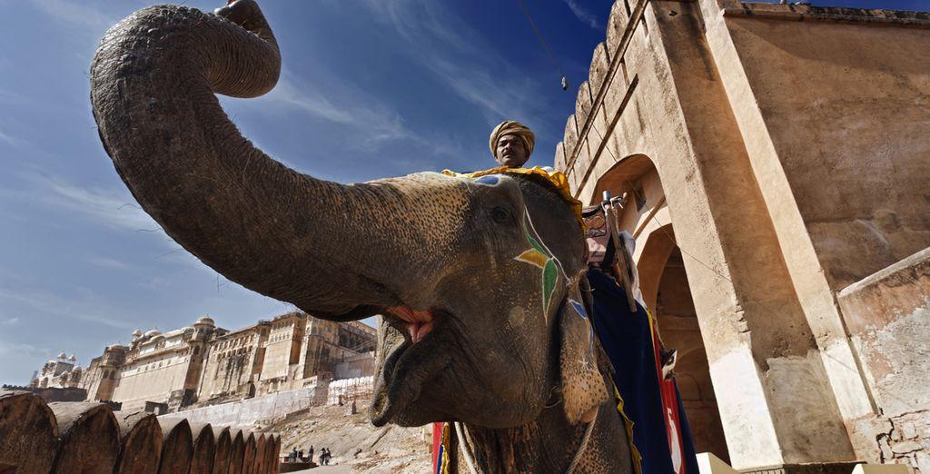 Salite a dorso di elefante sulla Fortezza di Amber