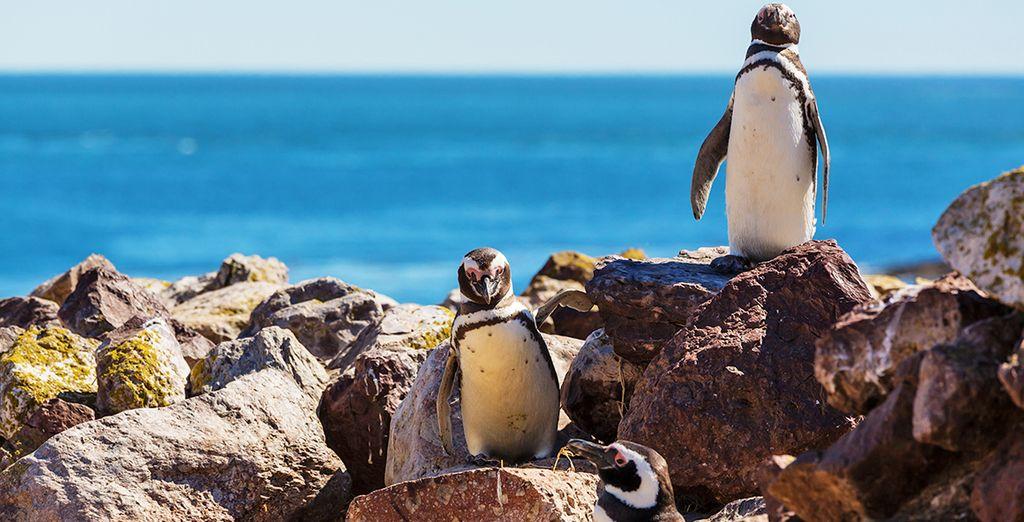 Partite per un incredibile viaggio alla scoperta della Patagonia Argentina
