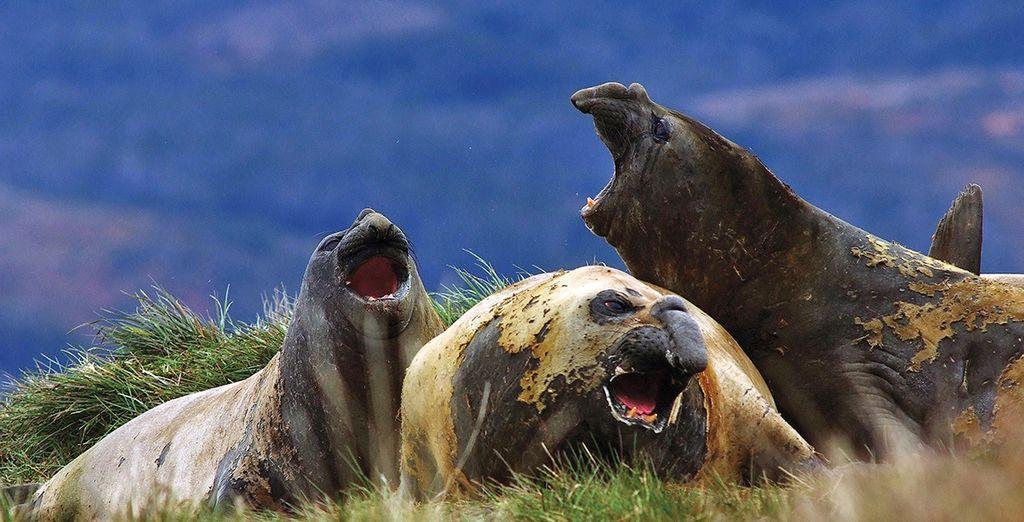 Visiterete il Faro di Punta Delgada, insediamento naturale di leoni marini