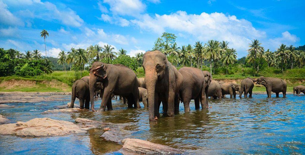 dove potrete avvistare gli elefanti allo stato brado che popolano il parco