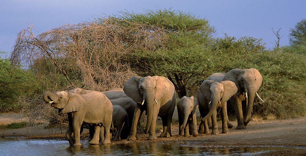 Esplorate e scoprite la natura del Sudafrica