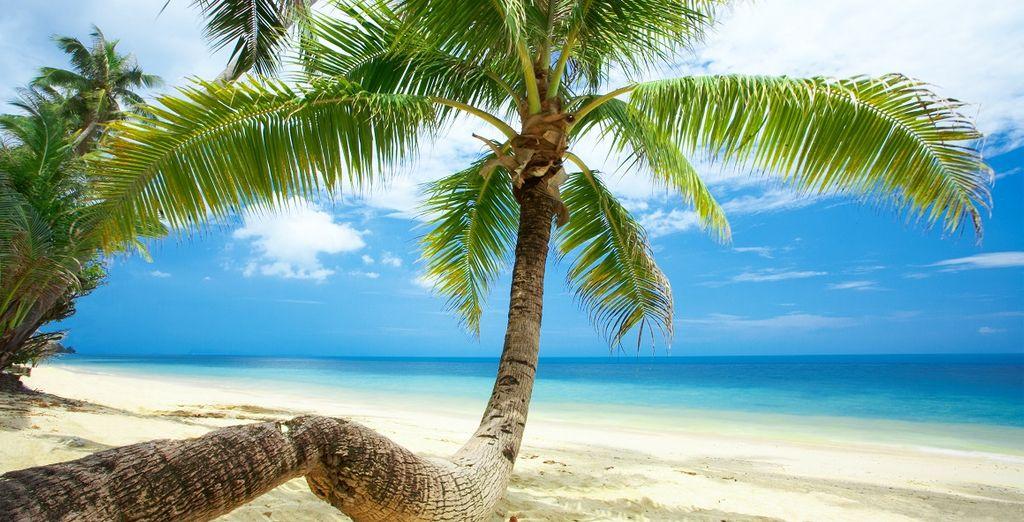 Vivrete poi giorni all'insegna del relax a Koh Samui