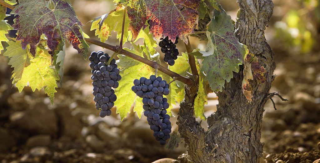Potrete assaporare il delizioso vino locale