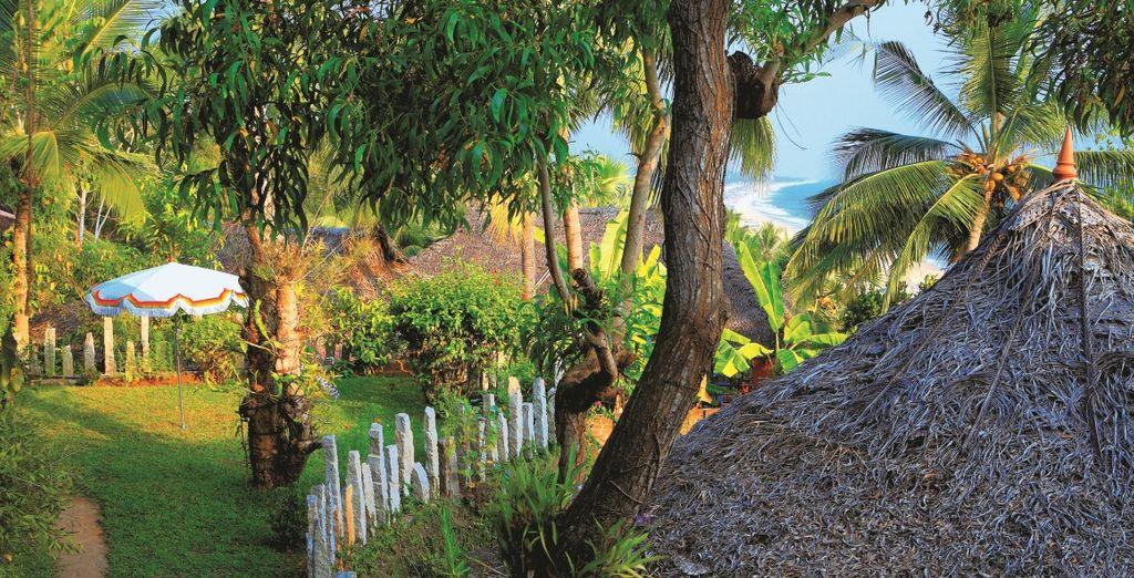 un paradiso tropicale di spiagge dorate e palme da cocco