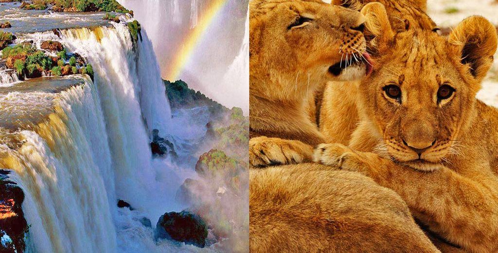 Scoprite con noi le meraviglie dell'Africa del sud