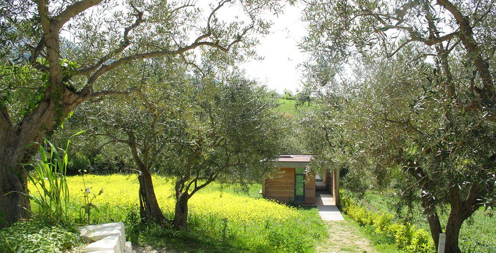 L'agriturismo si trova in una zona di alta collina a 600mt nel territorio corleonese