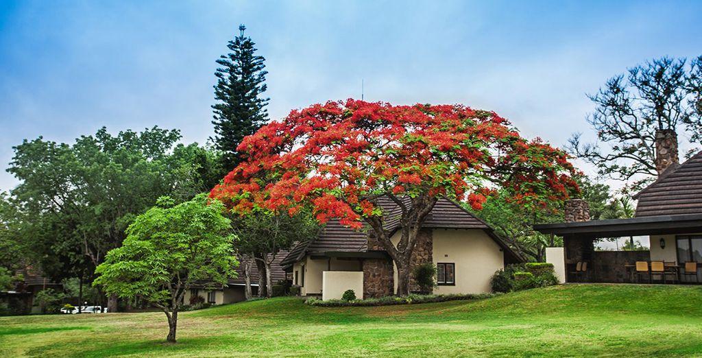 Immergetevi nei giardini botanici del Kruger Park