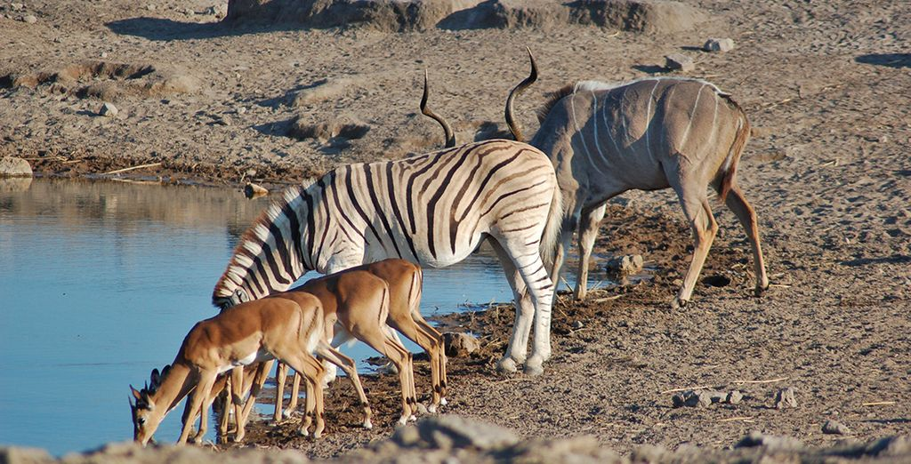Parco naturale della Namibia e osservazione degli animali a distanza libera