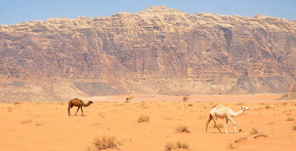 Vi perderete nella vastità del deserto