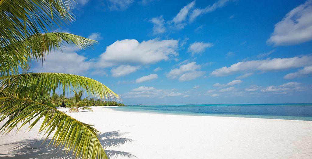 Spiaggia di sabbia bianca alle Maldive