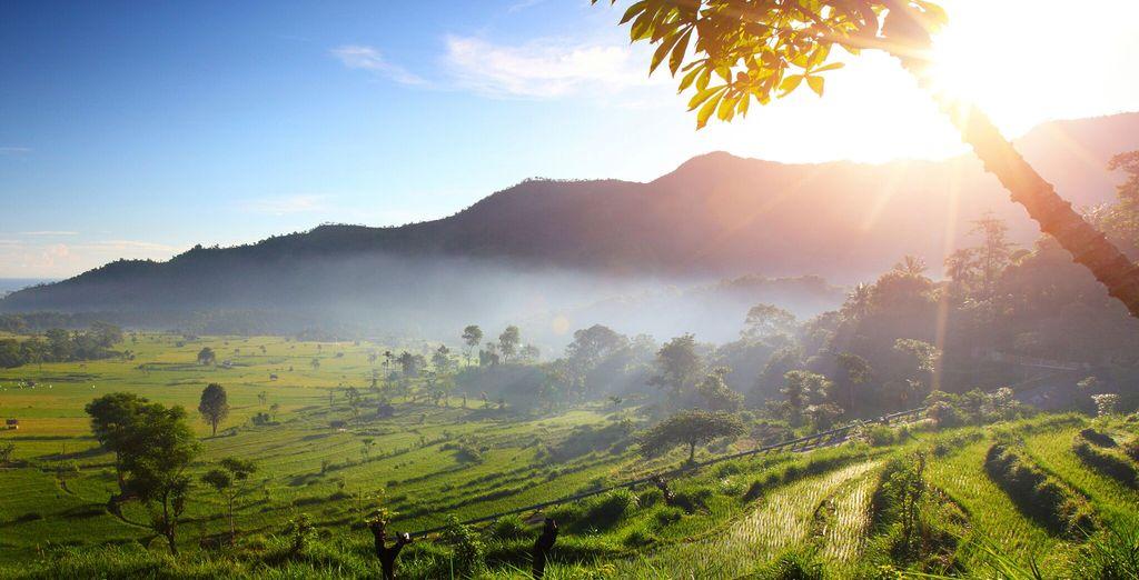 Visiterete Ubud, una cittadina immersa tra coltivazioni di riso e foreste