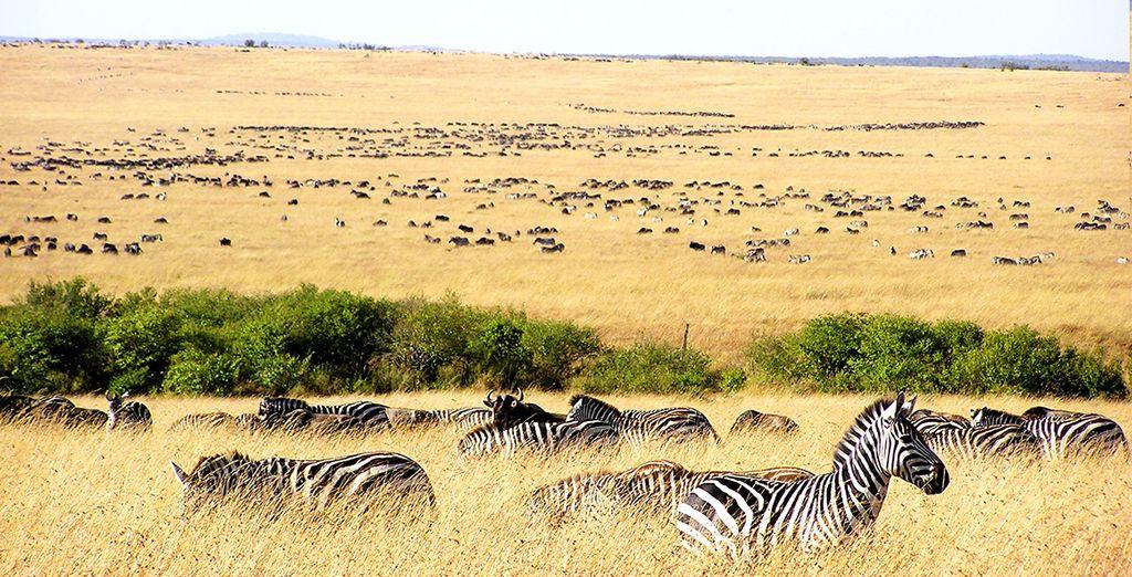 Partirete per un fantastico safari alla scoperta dell'Africa
