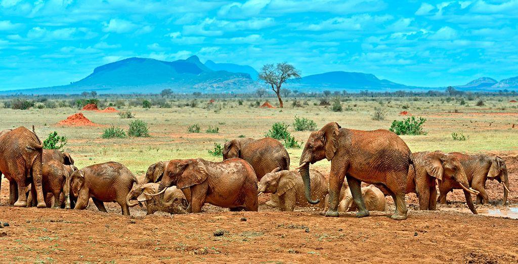 Bij 8 nachten gaat u op safari in Ngutuni Sal Lick