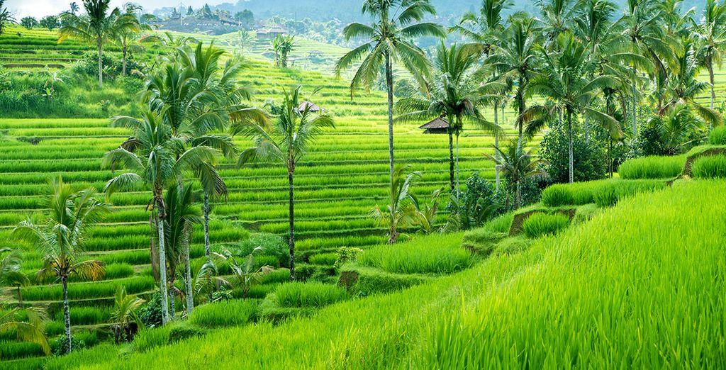 In de prachtige natuur van Ubud...