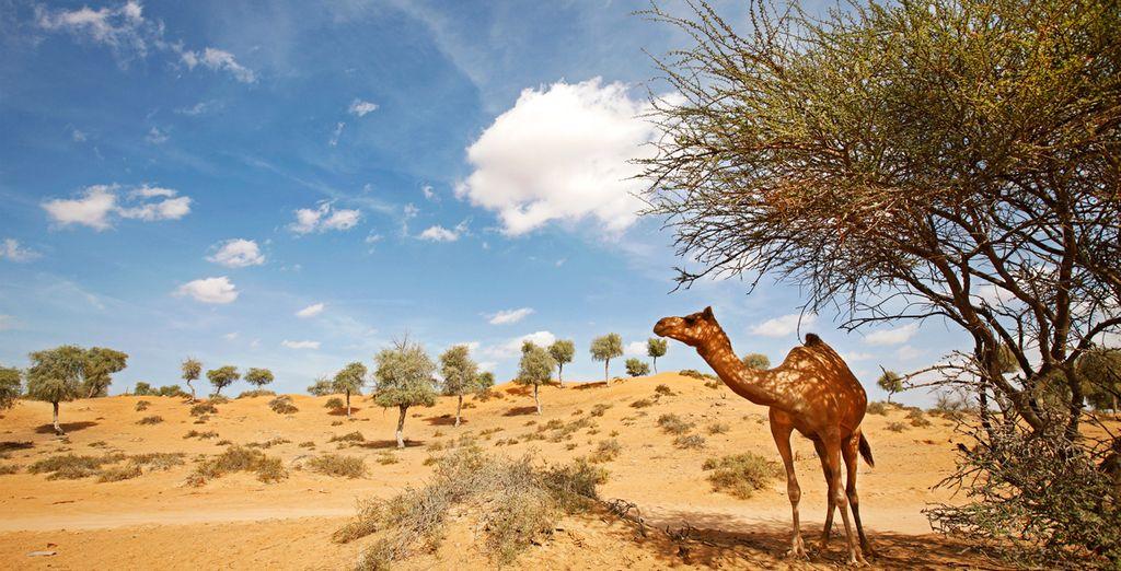 Dit alles gelegen in het noordelijke punt van het Arabisch schiereiland