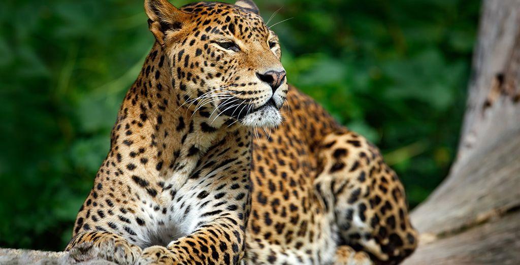 Een geweldig land, bekend om zijn wilde dieren...