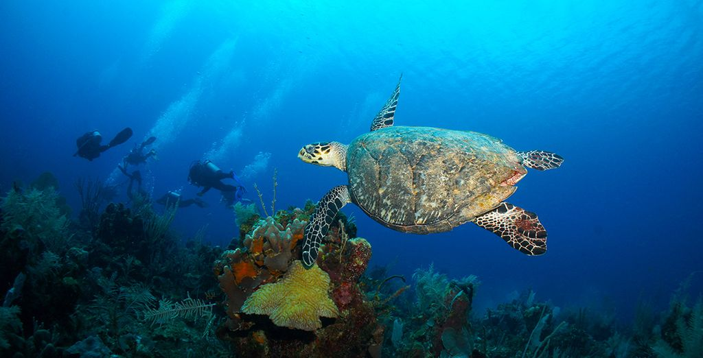 Duik in het diepe en ontdek de onderwaterwereld