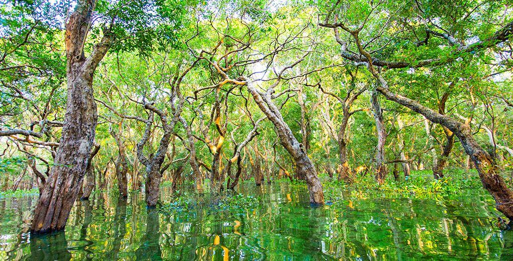 Vaar door de mangroven