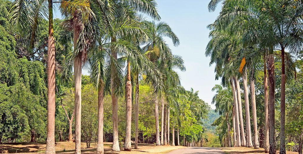 Wandel door de indrukwekkende botanische tuin van Peradeniya