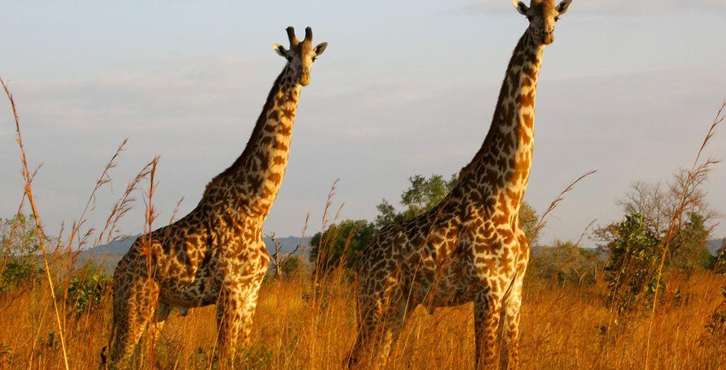 Bewonder de majestueuze wilde dieren