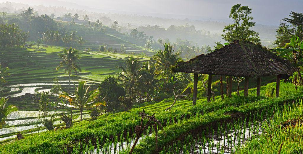 Ontdek de natuurlijke schoonheid van Ubud