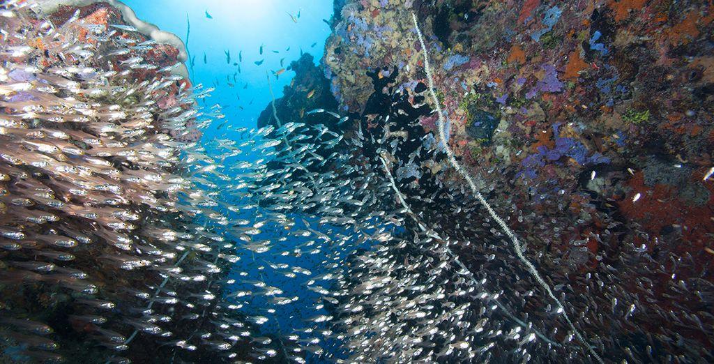 Duik in de diepten van het koraalrif Matenwe