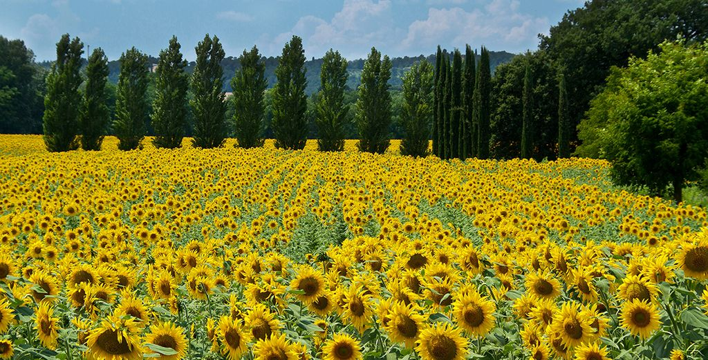 Amidst vast landscapes of olive trees, flowers, cypresses and vineyards