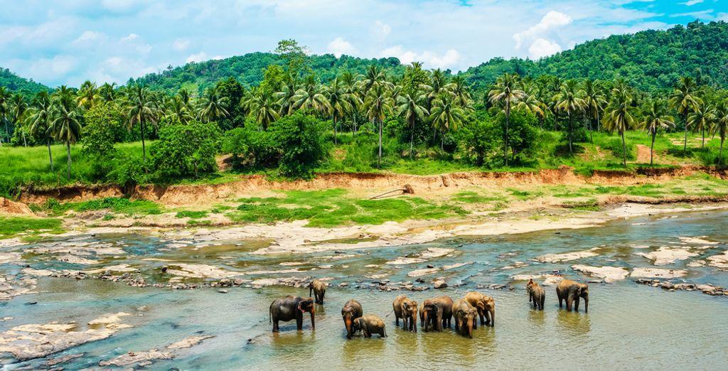Island Paradise Sri Lanka - honeymoon