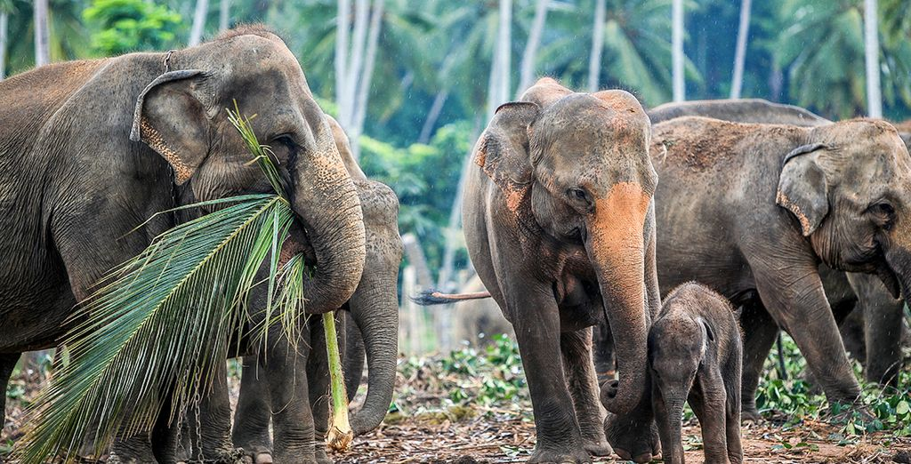 And Udawalawe National Park, famed for its large elephant population