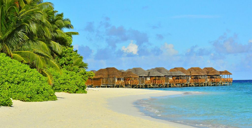 Then we will whisk you away to the beaches of the Maldives