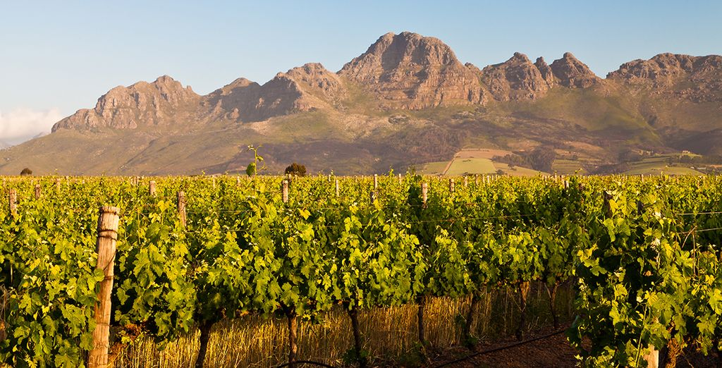 To the famous winelands of Stellenbosch