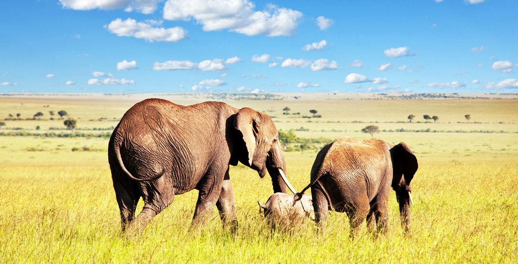Discover the thrilling beauty of Tanzania's wildlife