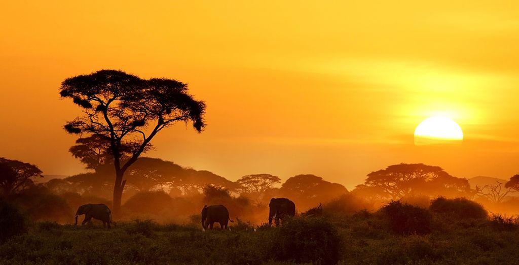 Kenyan Beach & Safari