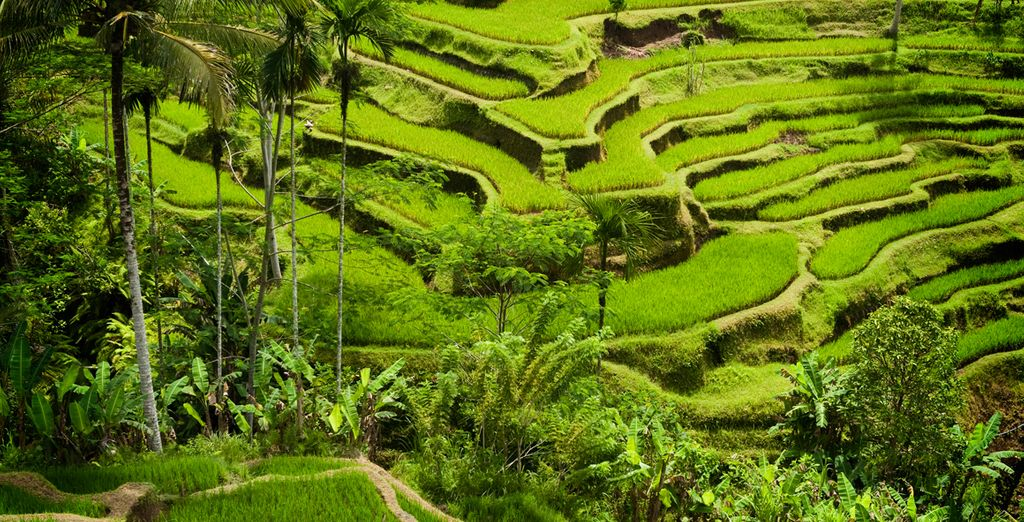 Set amidst an expanse of serene rice paddy fields and lush greenery