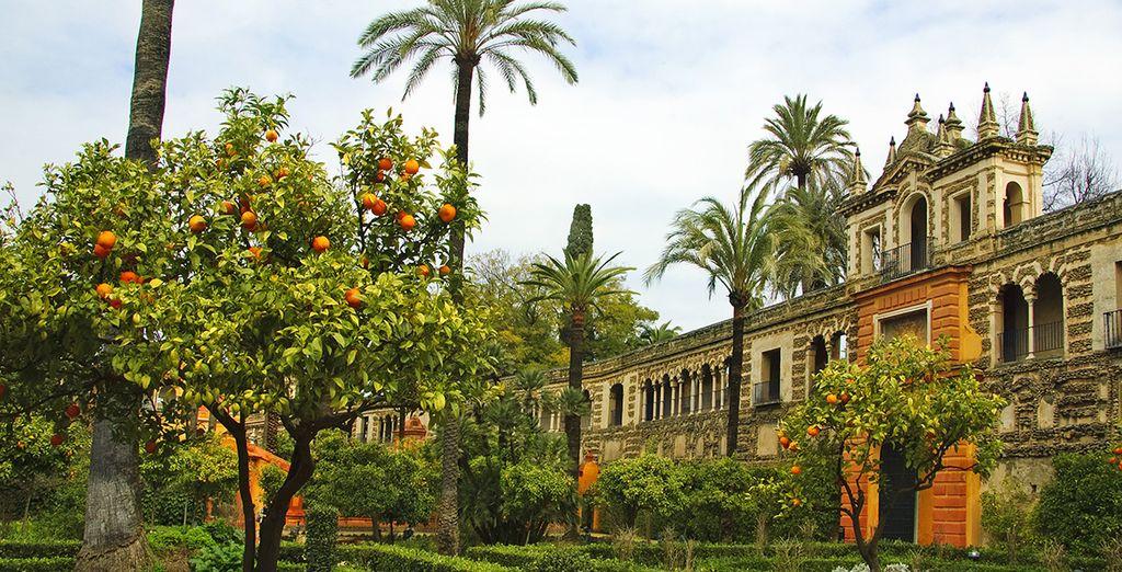And its lush, orange tree gardens
