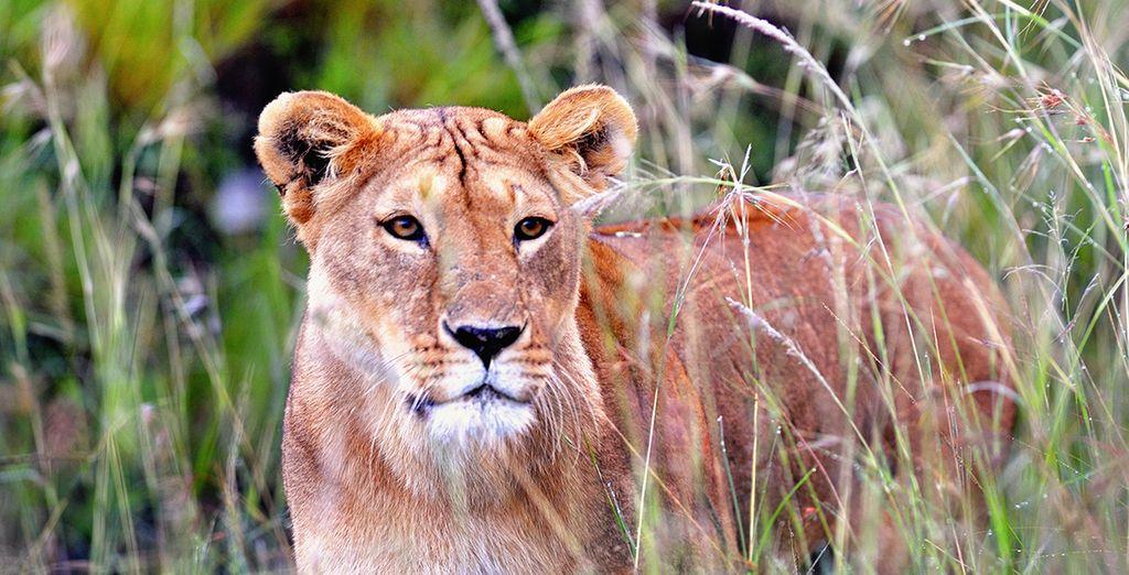 And the thrilling wildlife of Taita Hills