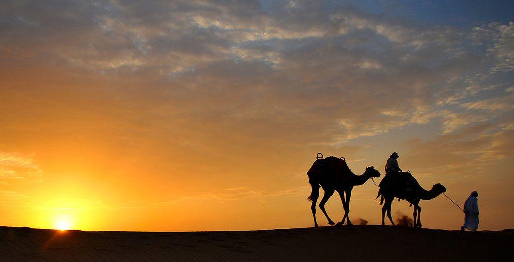 Explore the area on a desert safari