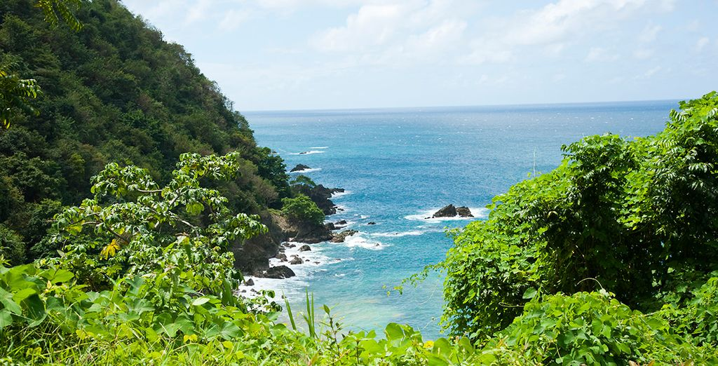 Tobago is an amazing destination for nature and activity lovers