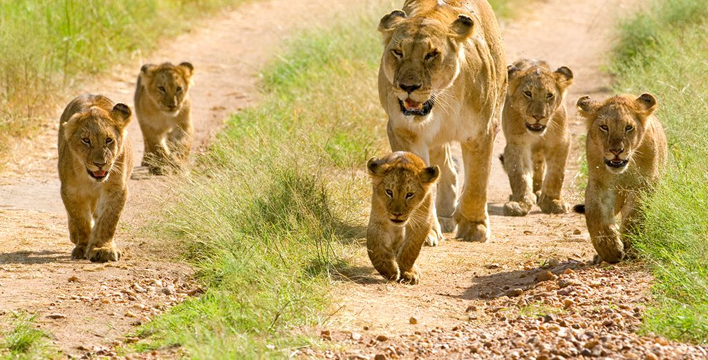 Where you can hope to spot some of the 'Big Five'