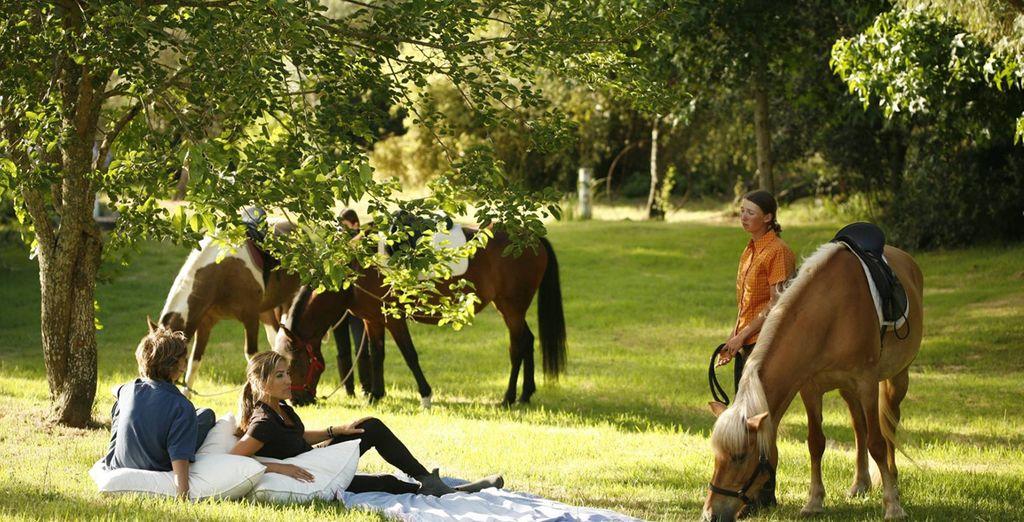 Enjoy a horse ride
