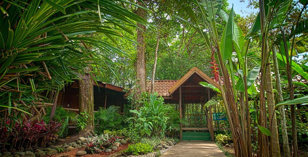 Your accommodation throughout ranges from rustic eco-lodges (Pachira lodge)