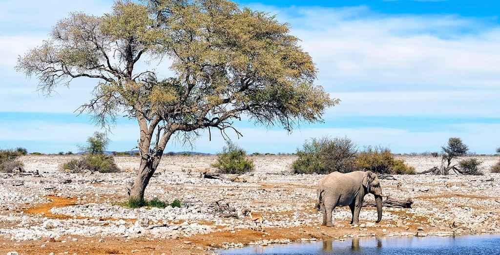 On this amazing tour of Namibia