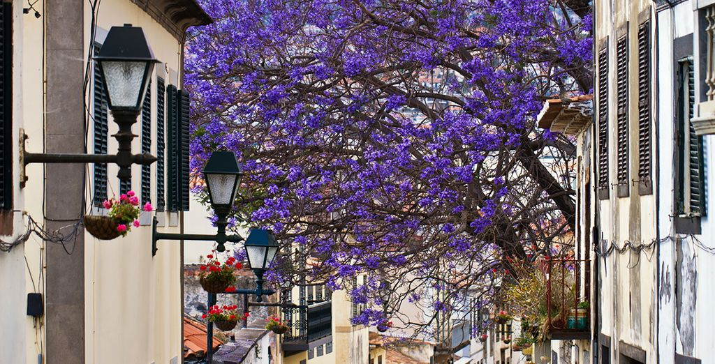 Stroll through the tree-lined streets