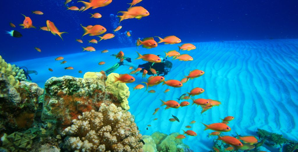 We've included a complimentary introductory dive
