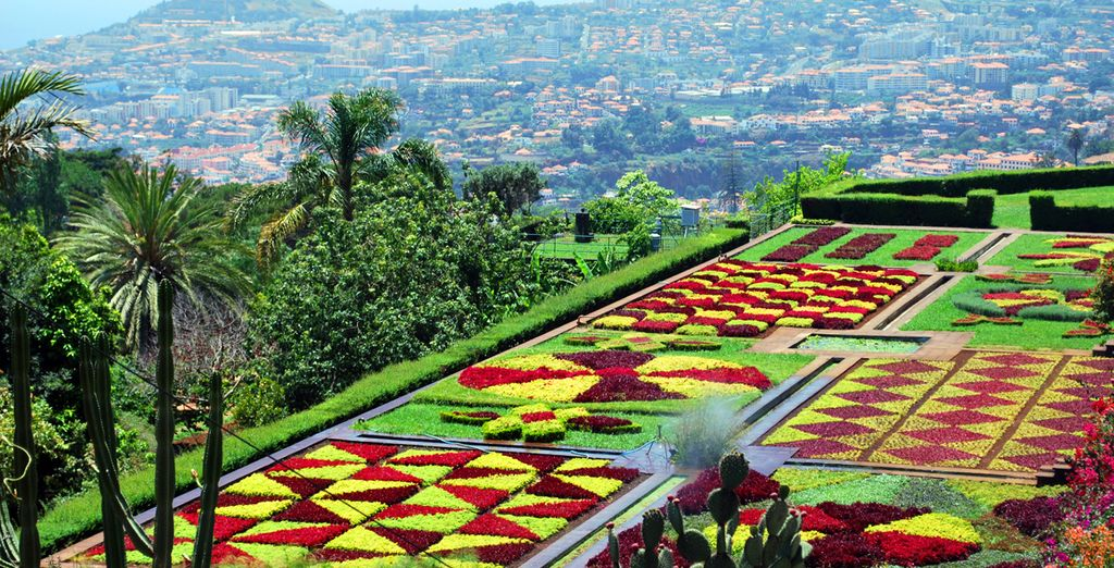 Pay a visit to the hillside botanical gardens and experience stunning natural beauty