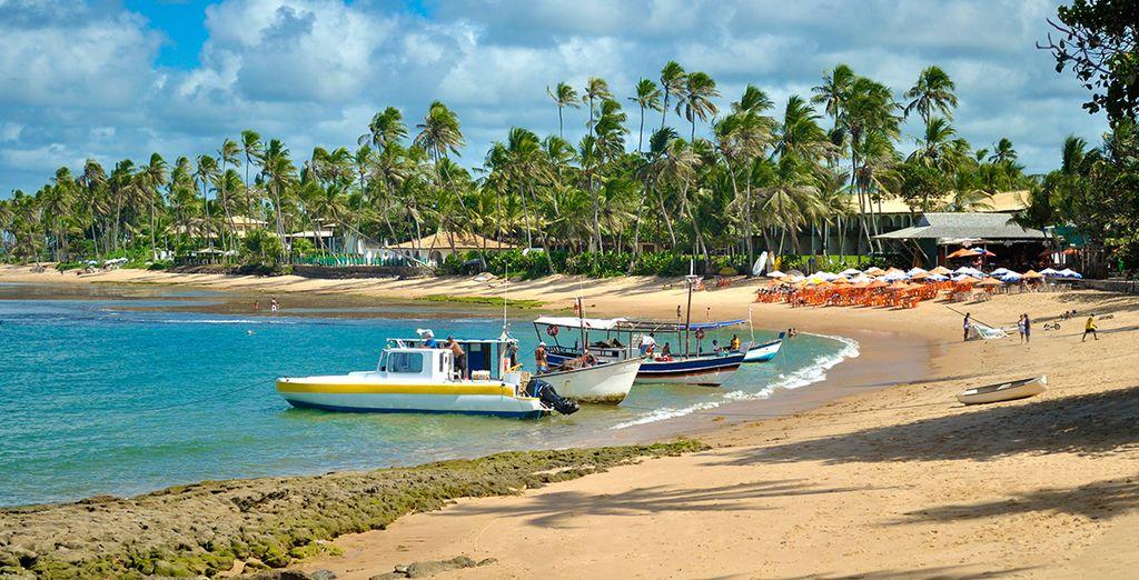And the idyllic beaches in Praia do Forte
