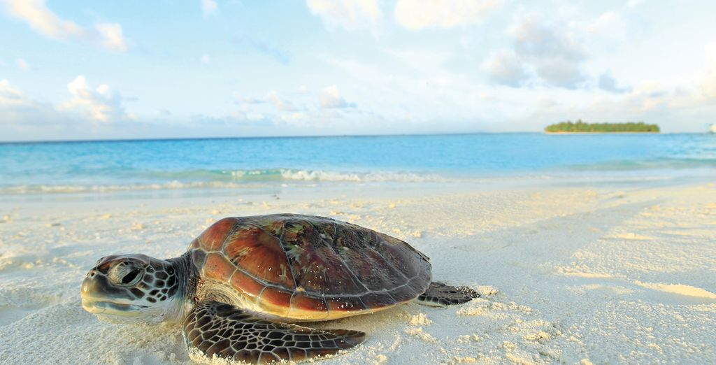 Meet some of the tropical locals!