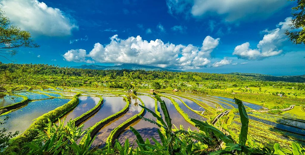 Exploration of Tegalalang Rice Terraces in Bali